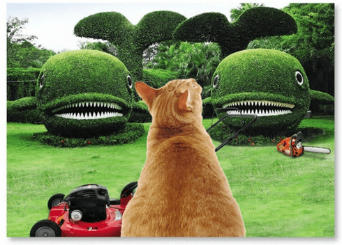 Cat Facing Whale Shaped Bushes