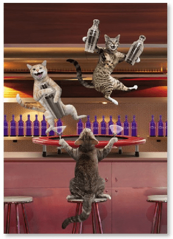 Cats at Bar with Trampoline