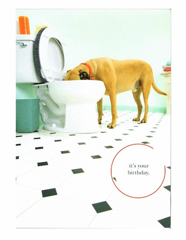 Dog Drink From The Toilet