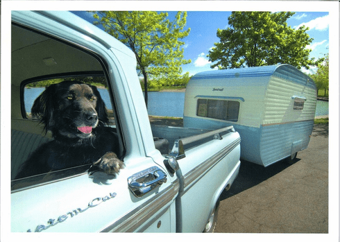 Dog for a cruise