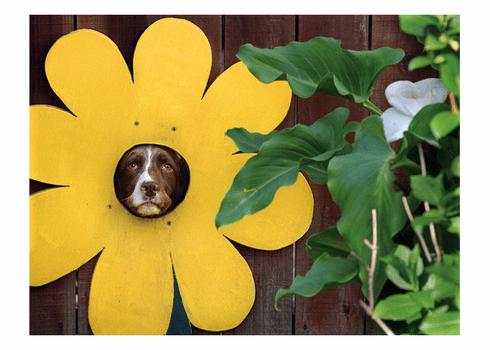 Dog Sunflower