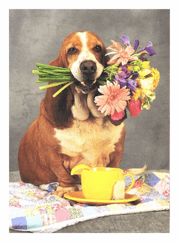Dog with Bunch of Flowers