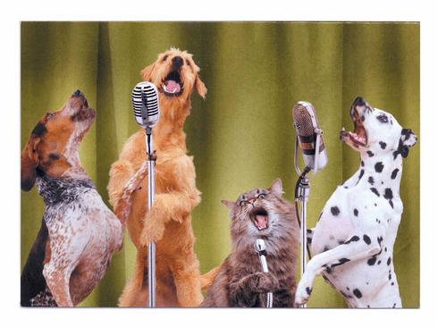 Dogs and Cat Singing on Mics
