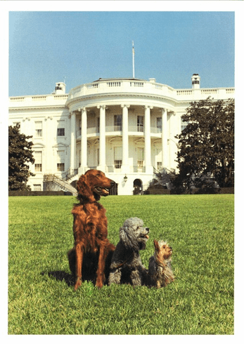 Dogs at White House