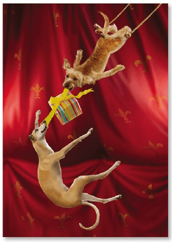 Dogs on Trapezee