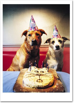 Dogs with Cat Cake