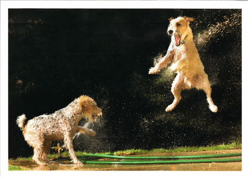 Dogs with the Sprinkler