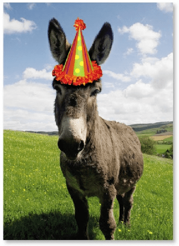 Donkey with Party Hat