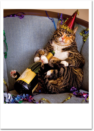 Fat Cat With Hat and Booze