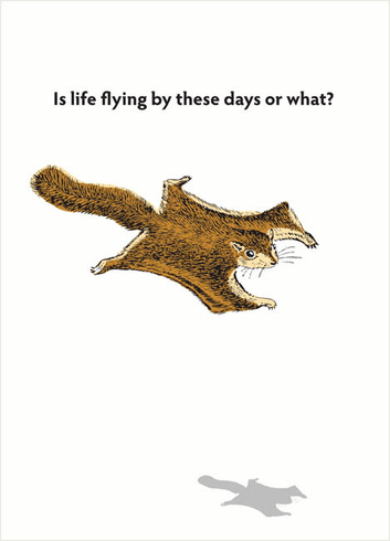 Flying Squirrel Life Flying By