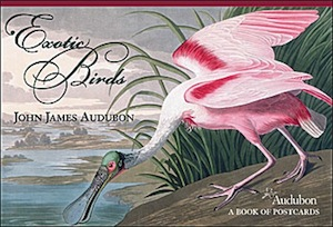 John James Audubon: Exotic Birds Book of Postcards