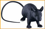 Jumbo Rubber Rat