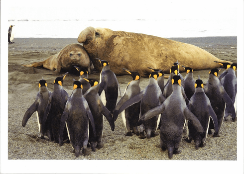 King Penguins & Elephant Seals