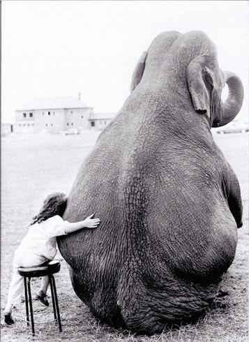 Little Girl Hugging Elephant