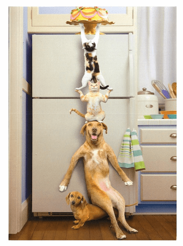 Pets Stacked to the Top of the Fridge