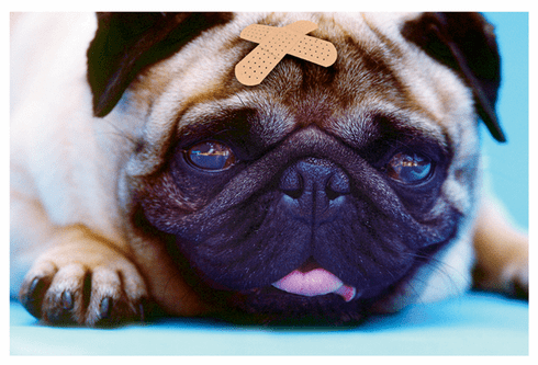 Photo of Dog with Band-aid Get Well Card
