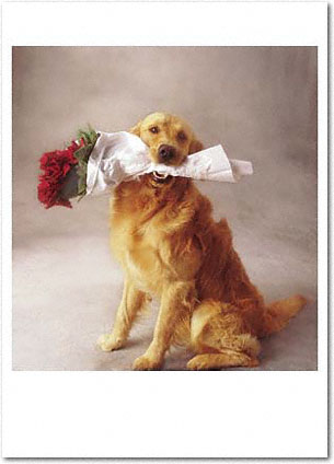 Retriever and Roses