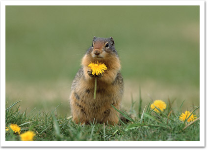 Squirell with Flower