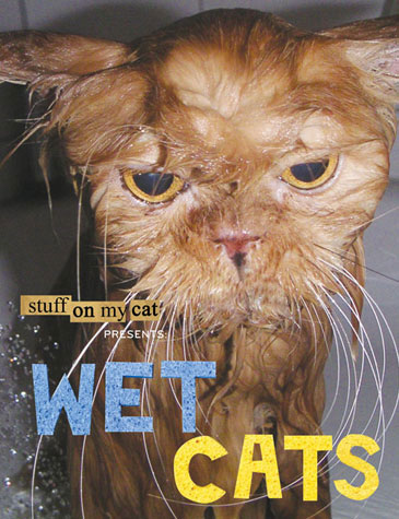 Stuff on My Cat Presents: Wet Cats