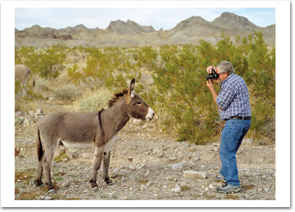 Taking Donkey's Picture
