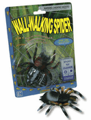 Wall-Walking Tarantula