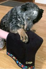 Great Idea - Create Your Own Wipe Your Paws Blankie