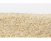 Organic Quinoa (1 Pound Bag)