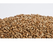 Unsalted No Shell Sunflower Seeds (1 Pound Bag)