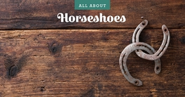 All About Horseshoes!