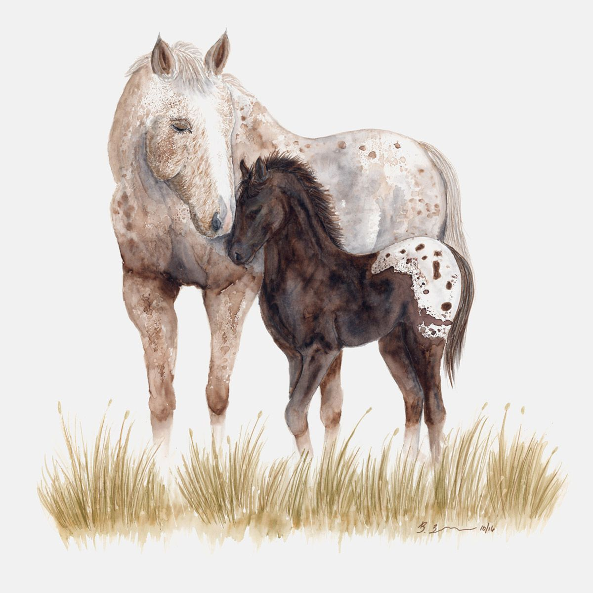 Appaloosa Mare and Foal Canvas Art