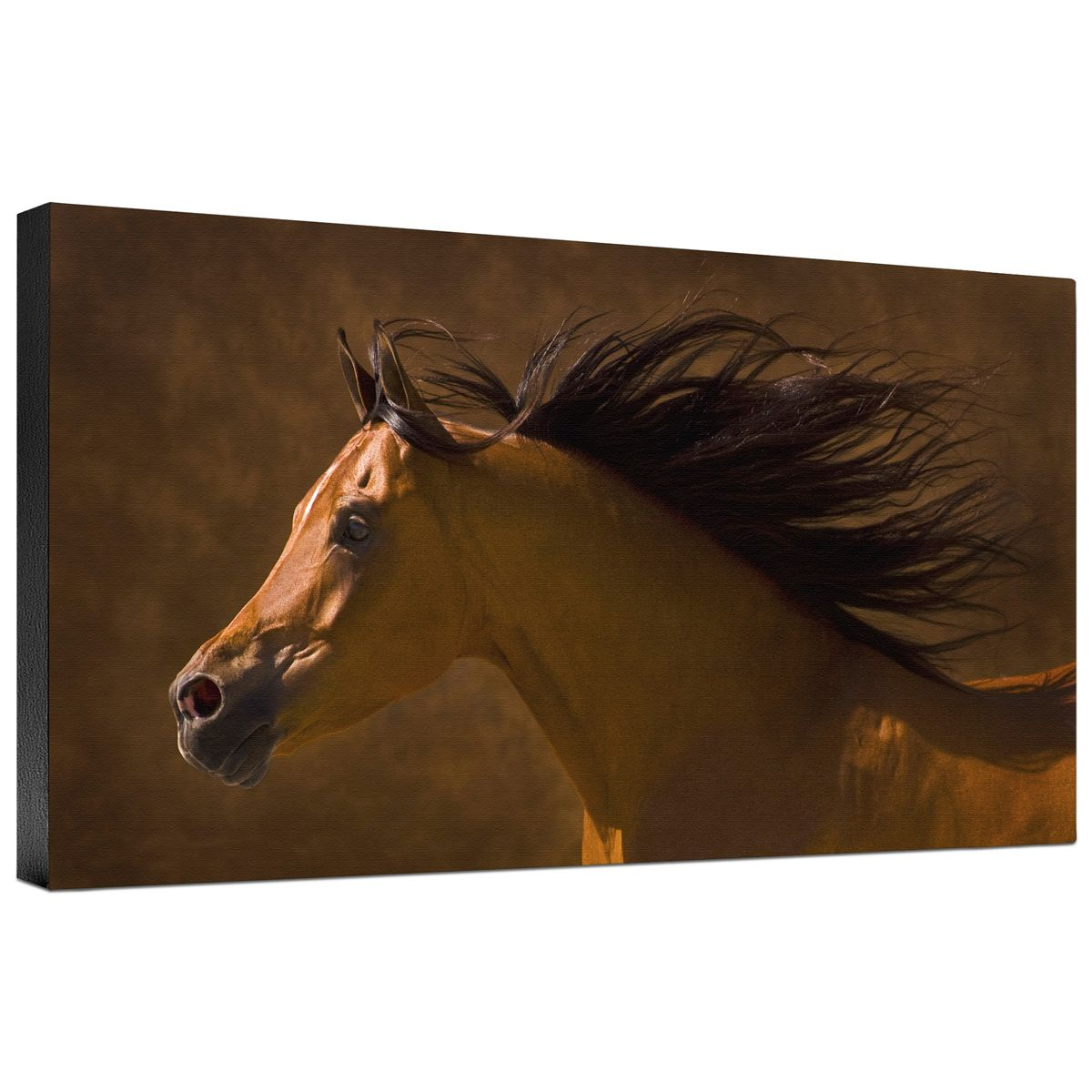 Arabian Runner Gallery Wrapped Canvas