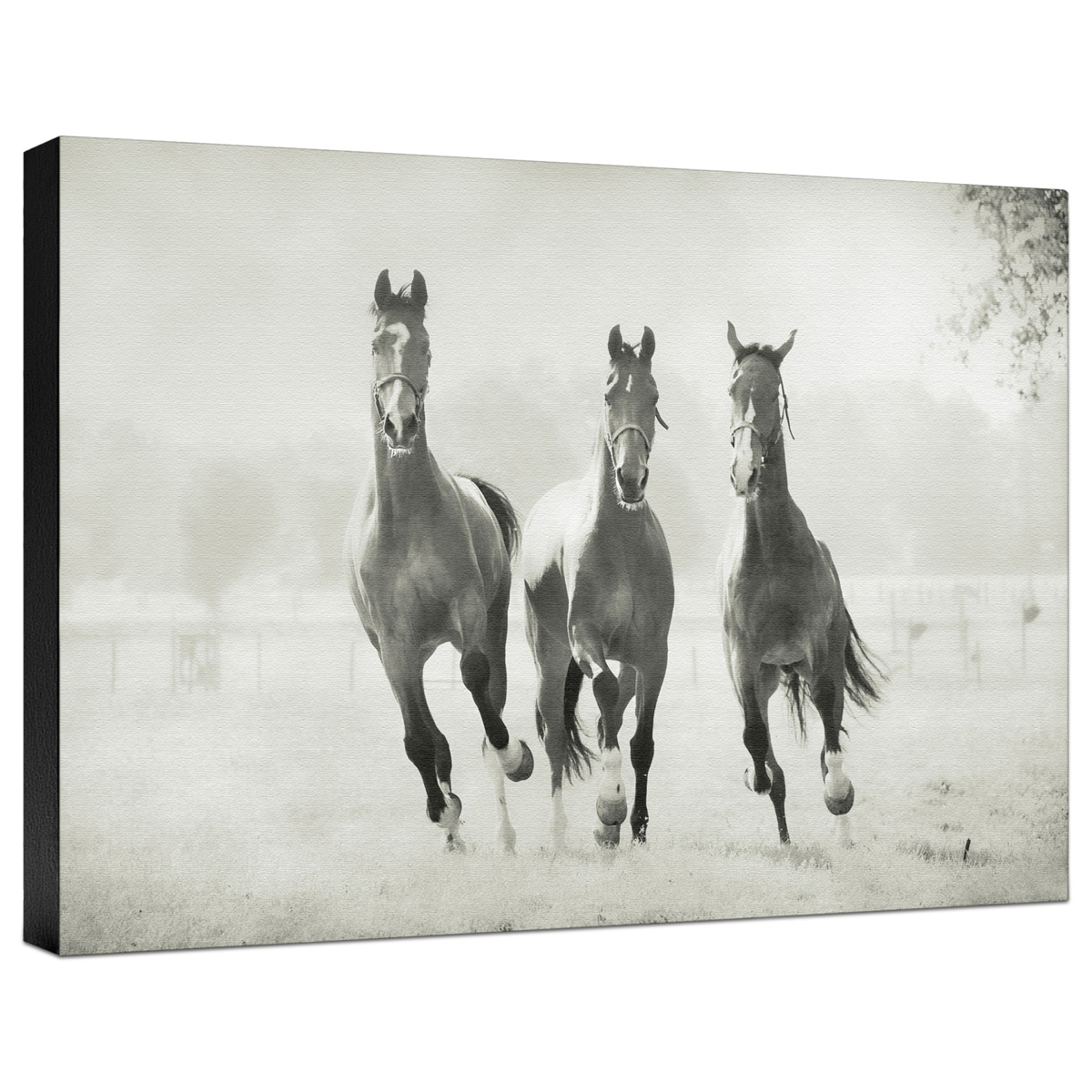 Arriving Gallery Wrapped Canvas