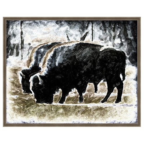 Bison Grazing Framed Canvas