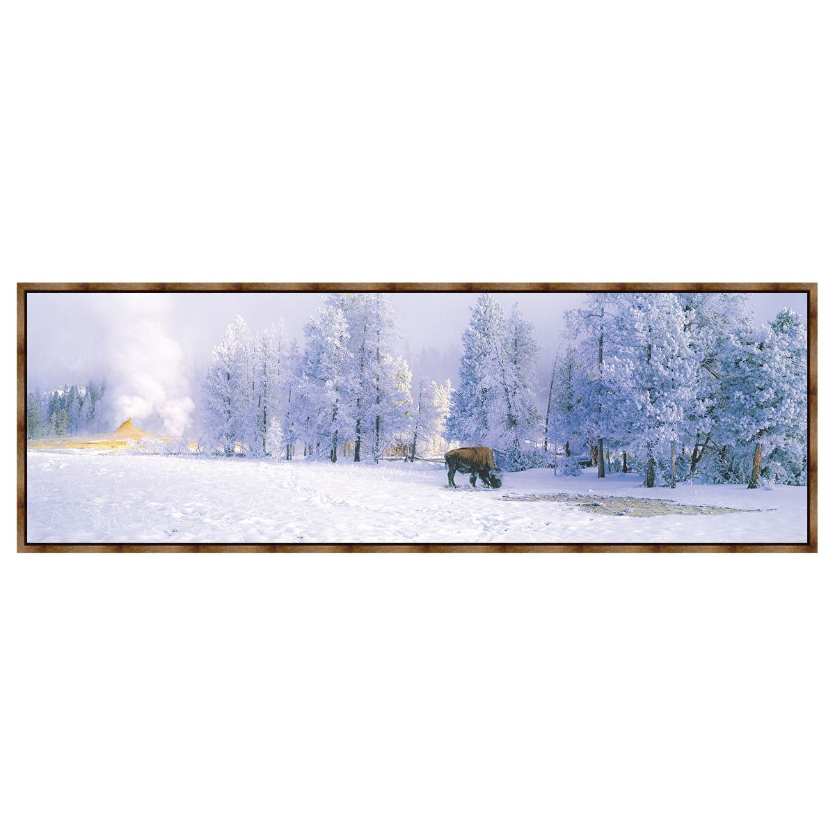 Blizzard Buffalo Framed Canvas