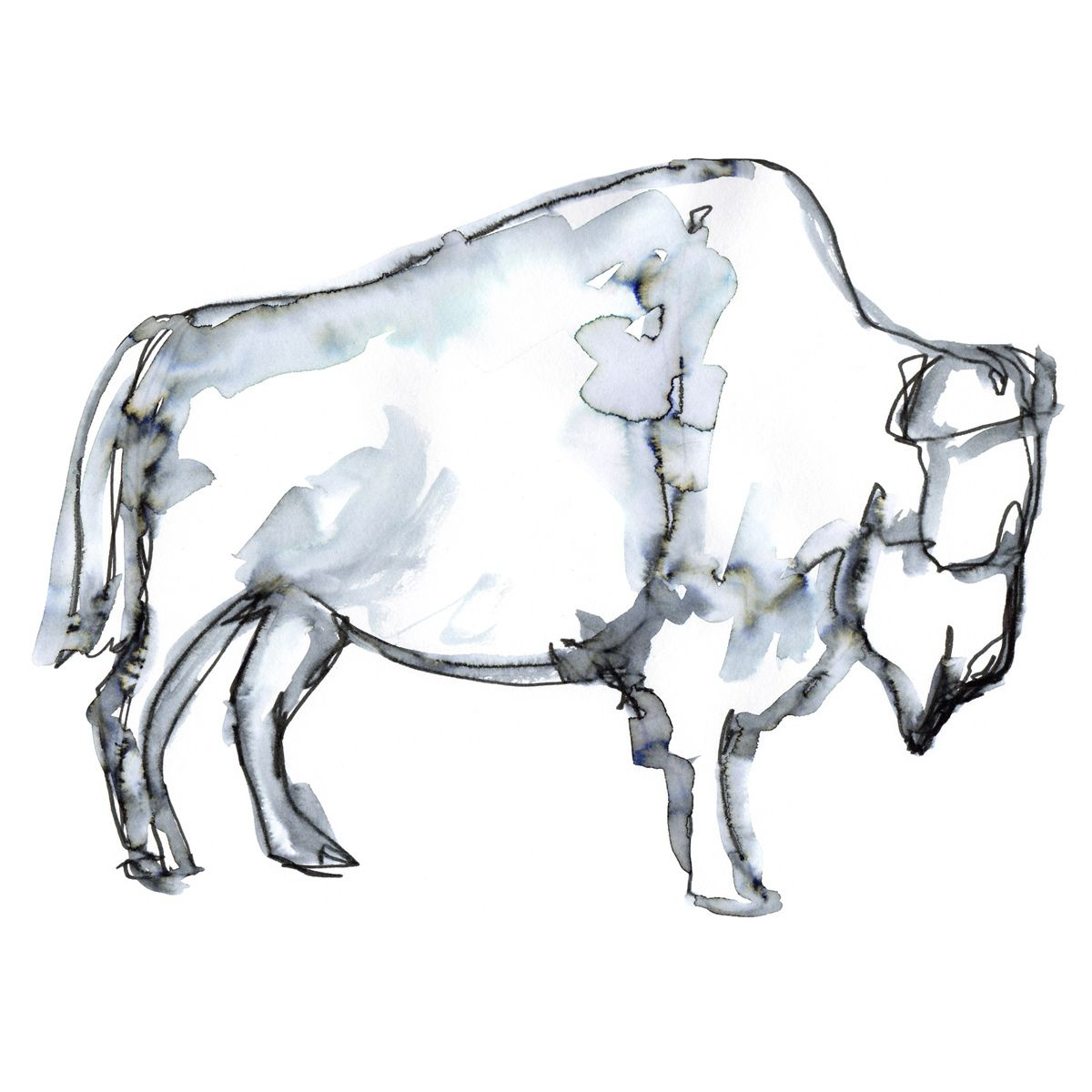Blue Buffalo Sketch Canvas Art