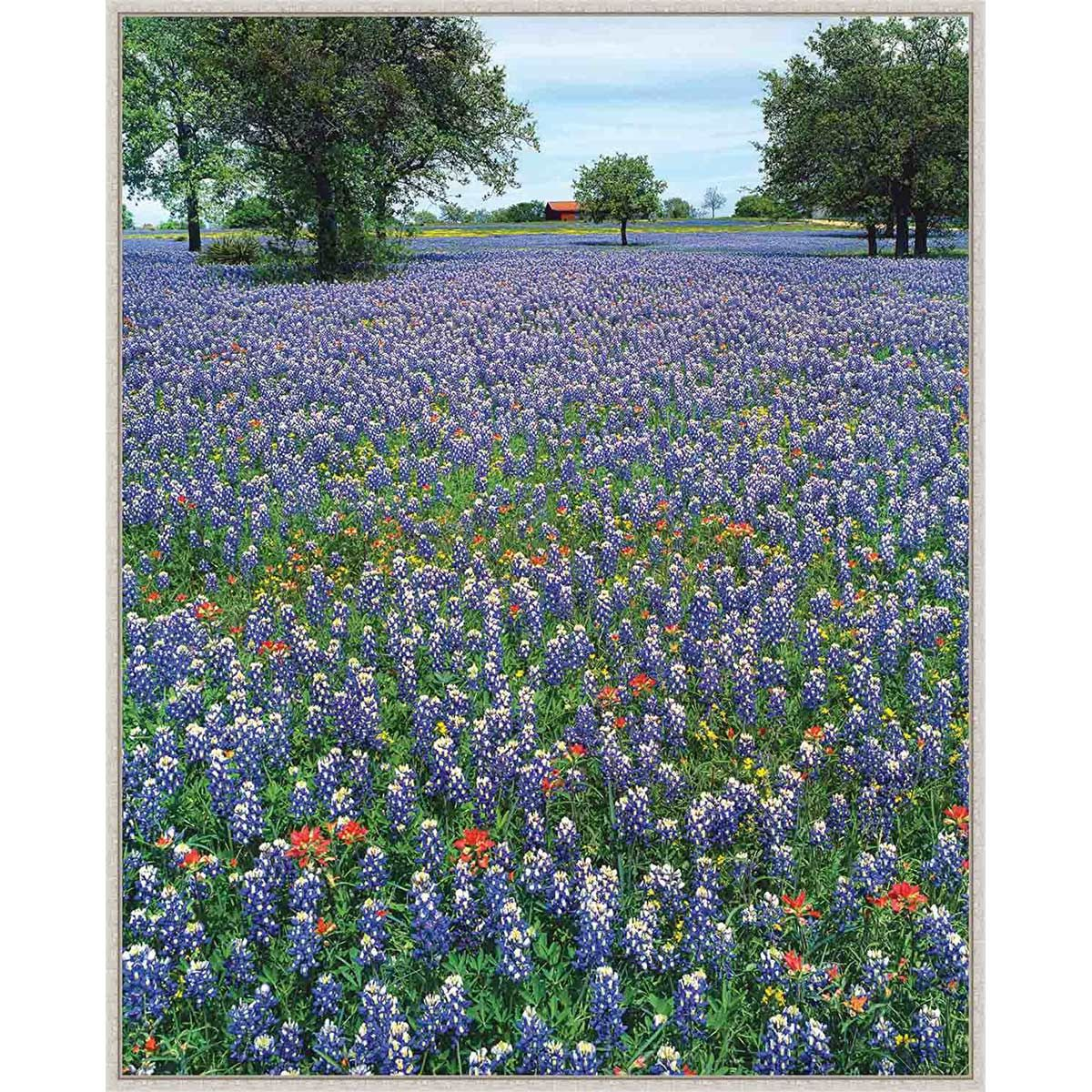 Bluebonnet Morning Framed Canvas