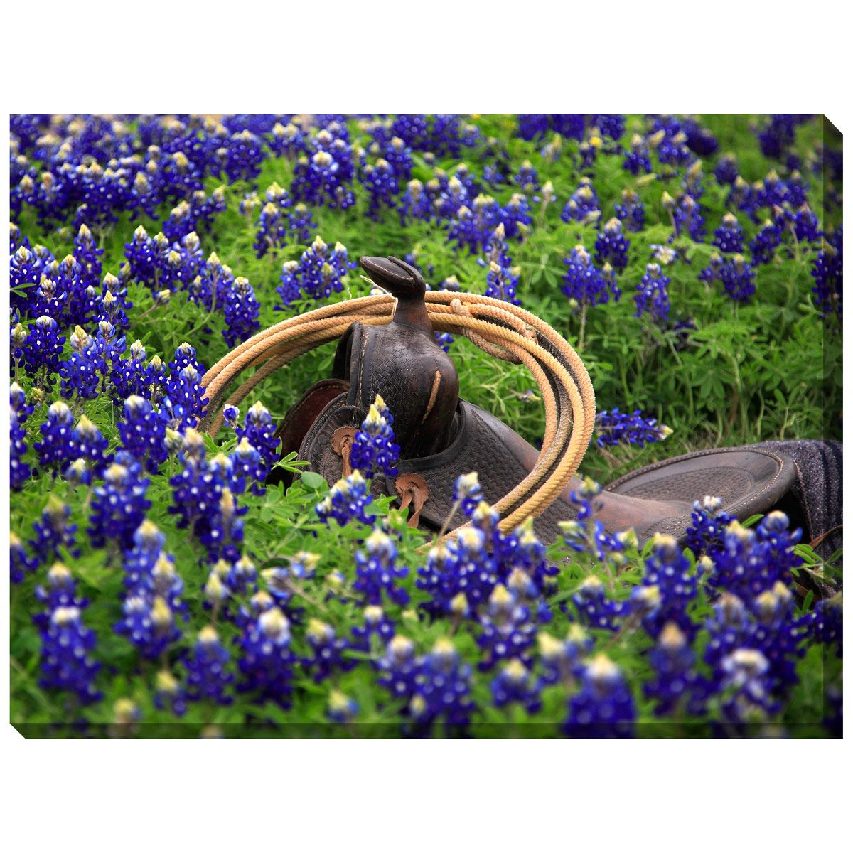 Bluebonnet Saddle Indoor/Outdoor Canvas Art