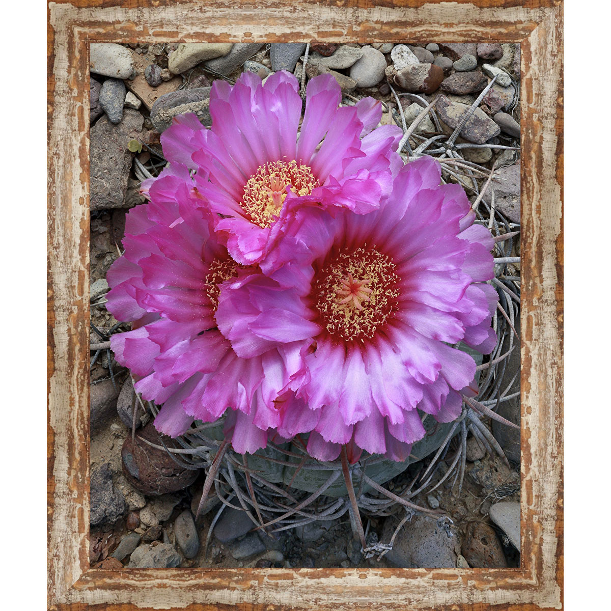Borrego Cactus Framed Canvas