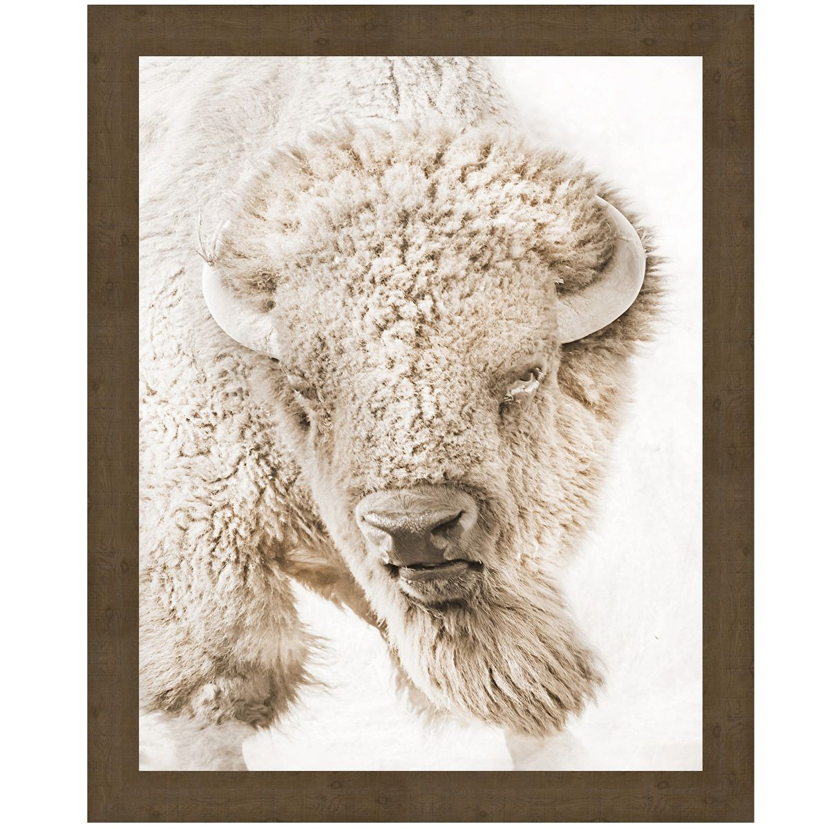 Bull Watch Canvas Art