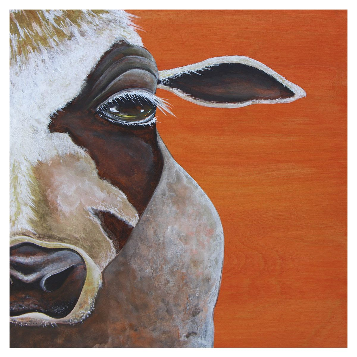 Confrontational Cow Canvas Art
