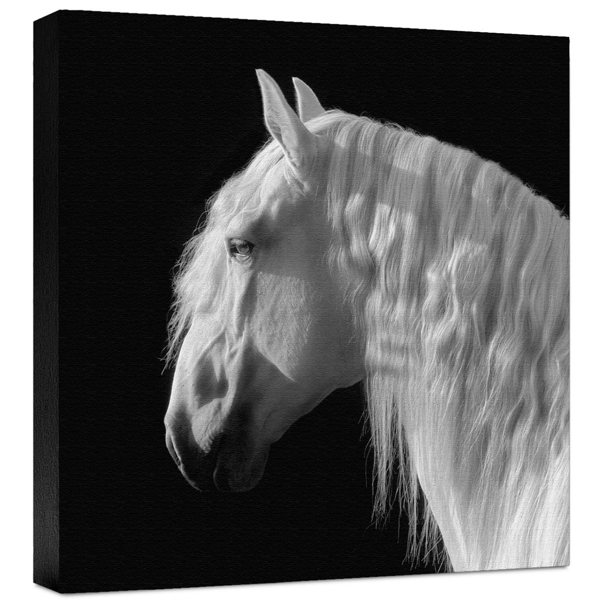 Contemplation Gallery Wrapped Canvas