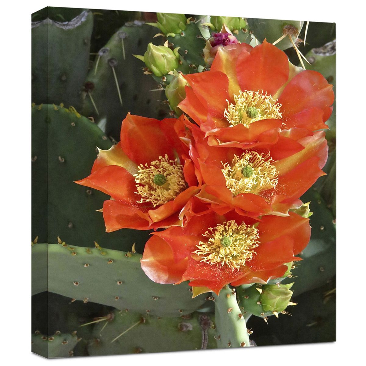 Coral Desert Blooms Wrapped Canvas