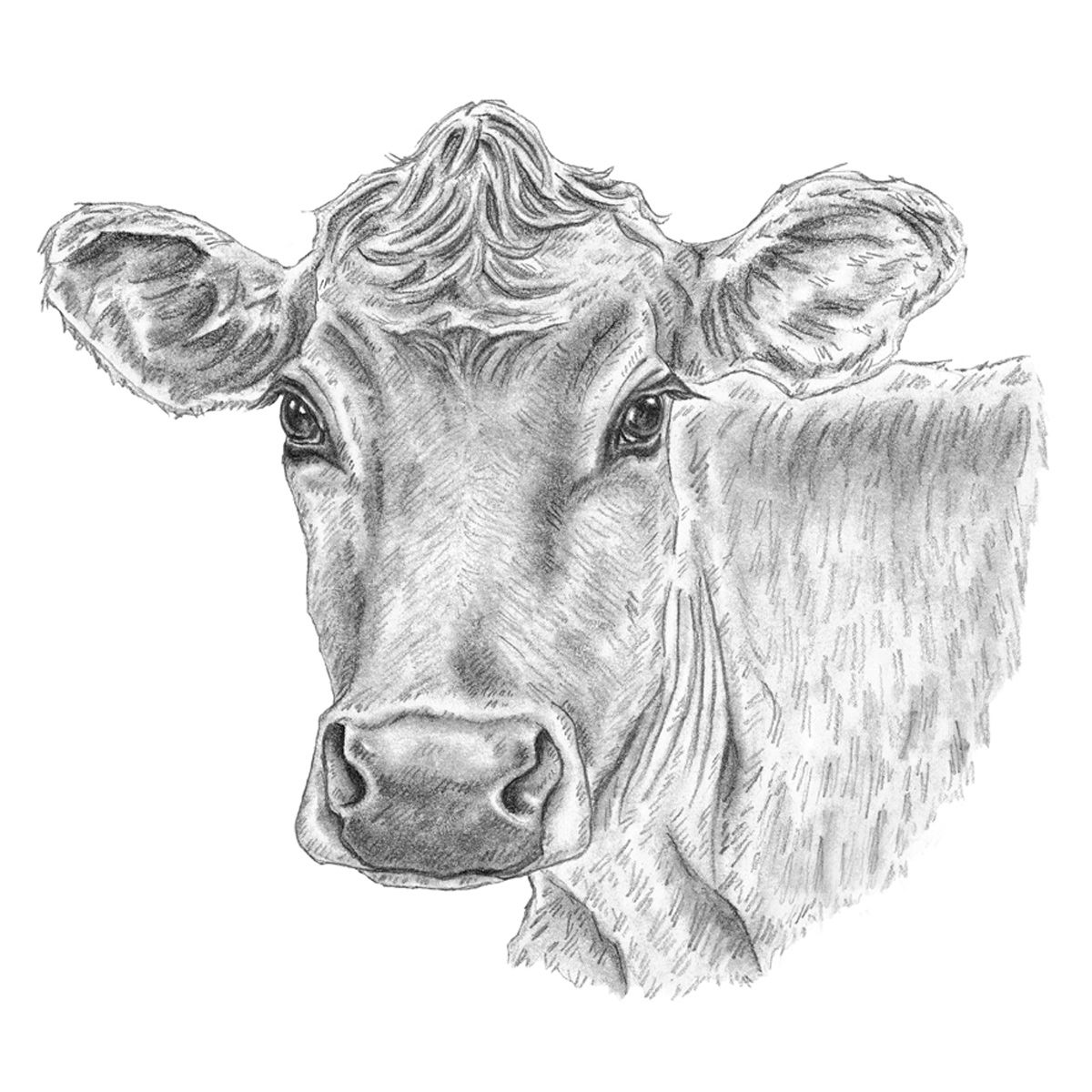 Cow Gaze Canvas Art