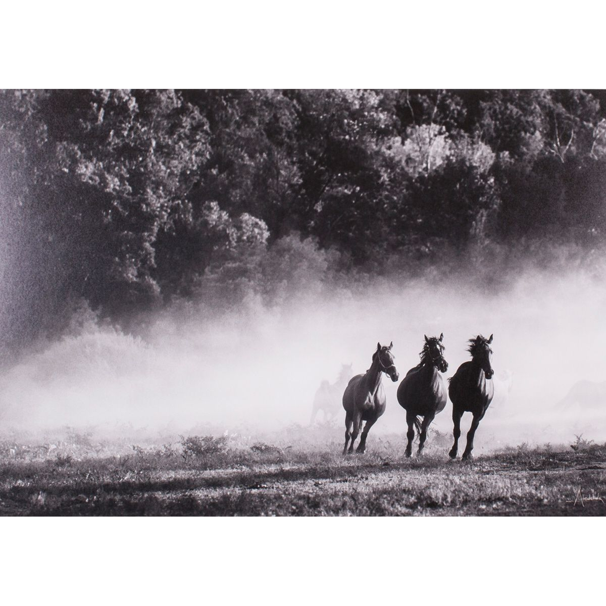 Dusty Gallop Canvas Art