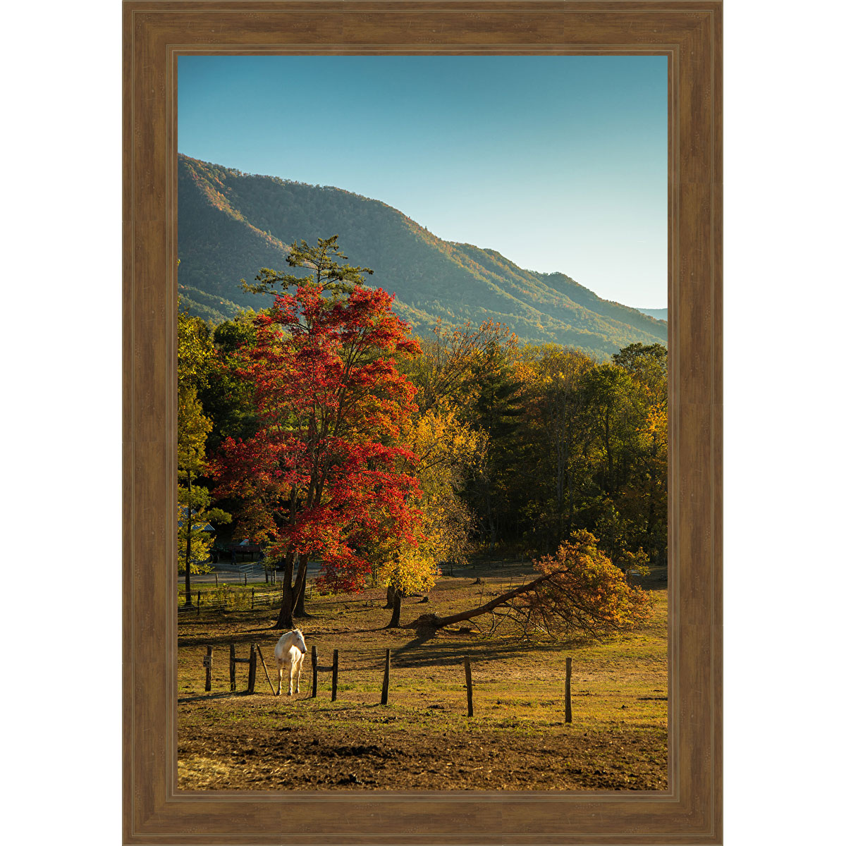 Equestrian Autumn Framed Canvas