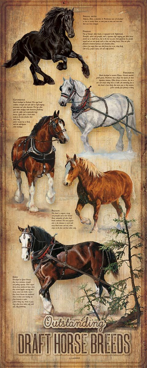 Equestrian Breeds Wood Sign
