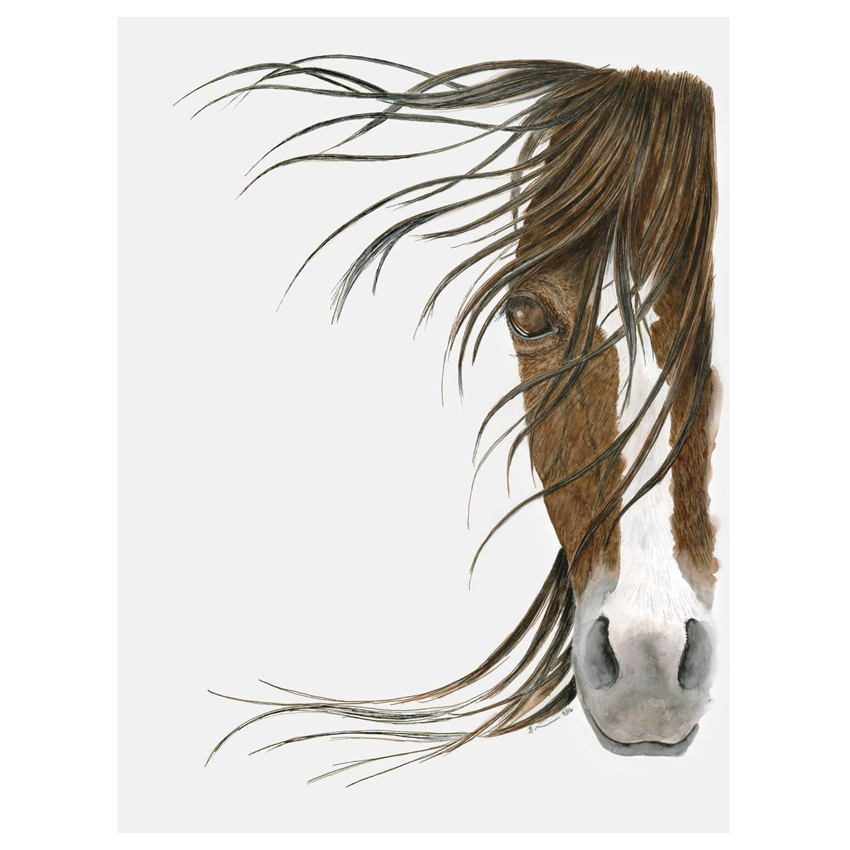 Equine Vision Canvas Art