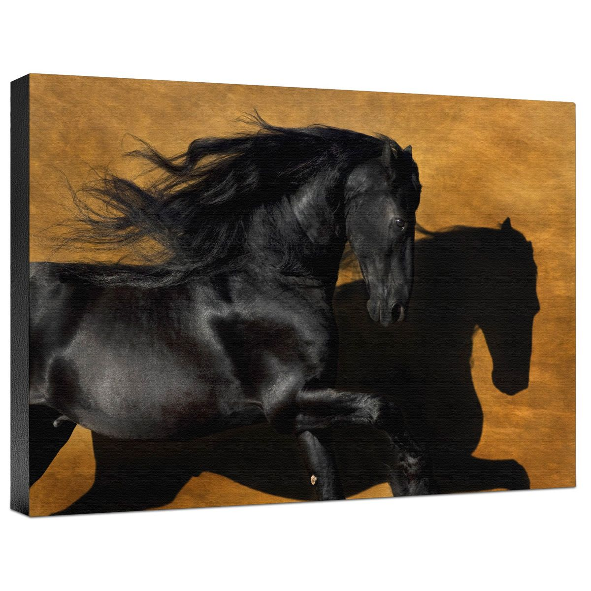 Fabiano I Color Gallery Wrapped Canvas