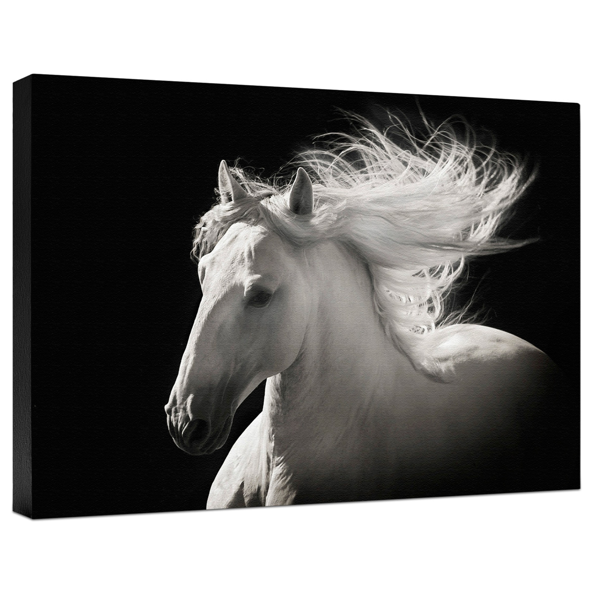 Gray Ghost Gallery Wrapped Canvas