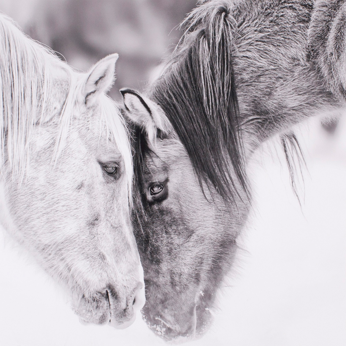 Gray Horses I Canvas Art